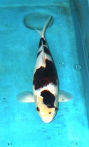 007-Family Fish farm-3F-Makassar-Goromo-38